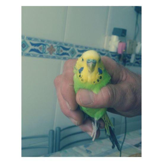 Daddy's Bird Cute♡ Check This Out Taking Photos