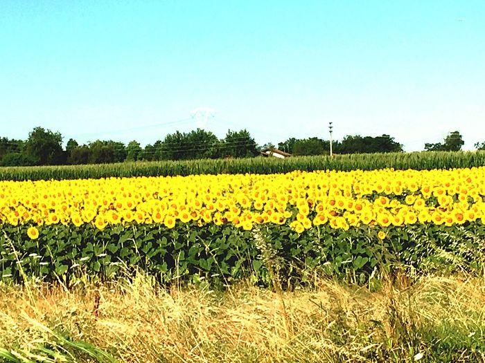Growth Flower Field Tranquil Scene