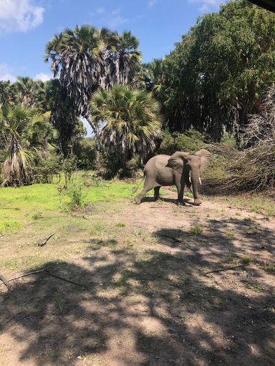 Animal Mammal Animal Themes Nature Animal Wildlife Elephant Wild Safari Save The Elephant