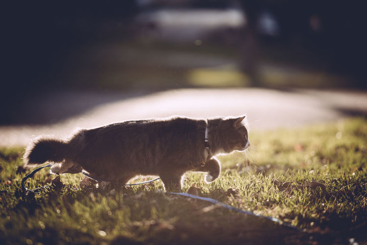 Cat on grassy field on during sunny day