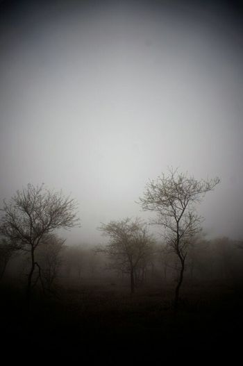 """Trasfondo""... HUAWEI Photo Award: After Dark Tree Bare Tree Fog Spooky Winter Sky Landscape"