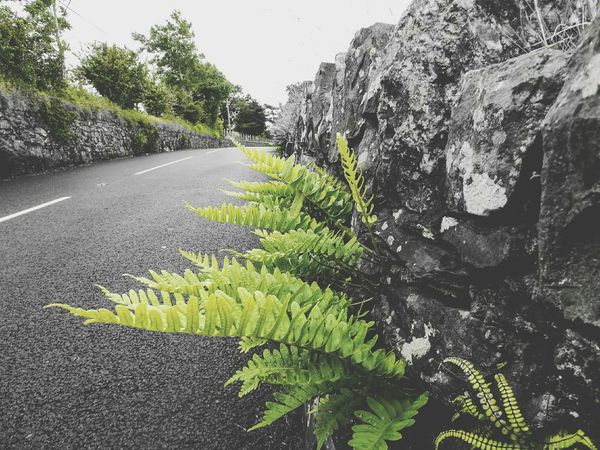 Growth Plant Nature Outdoors Day Green Color No People Beauty In Nature Tree Close-up Sky Growth Blackandwhite Photography EyeEm Nature Lover EyeEm Best Shots Beauty In Nature Ferns Road Marking Road
