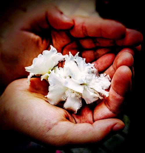 Flowers in baby hands!! Flower Flowers Babyhands Flowerphotography Flowers 🌸🌸🌸 Flowers, Nature And Beauty