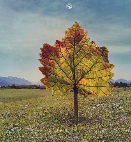 Se despierta otra vez en mí esa sensación de que soy la única persona en el mundo que está desprovista de humanidad, mierda, es la verdad, así es como me siento.   https://youtu.be/Xbiav8Gd3MY   Cada Loco Con Su Meta Por Mis Desastres Me Conocerás Ánimo. Puedes Hacerlo Peor Mi Niña Interior Es Francotiradora Autumn Sky Beauty In Nature Nature Plant Leaf Cloud - Sky Tranquility Scenics - Nature No People Tranquil Scene Outdoors