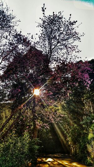 There is alway the light. Tree Nature No People Beauty In Nature Rookiephotographer Flare Sunlight And Shadow Sunlight ☀