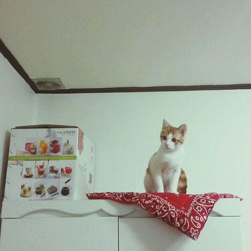 Cat 장롱 위의 고양이