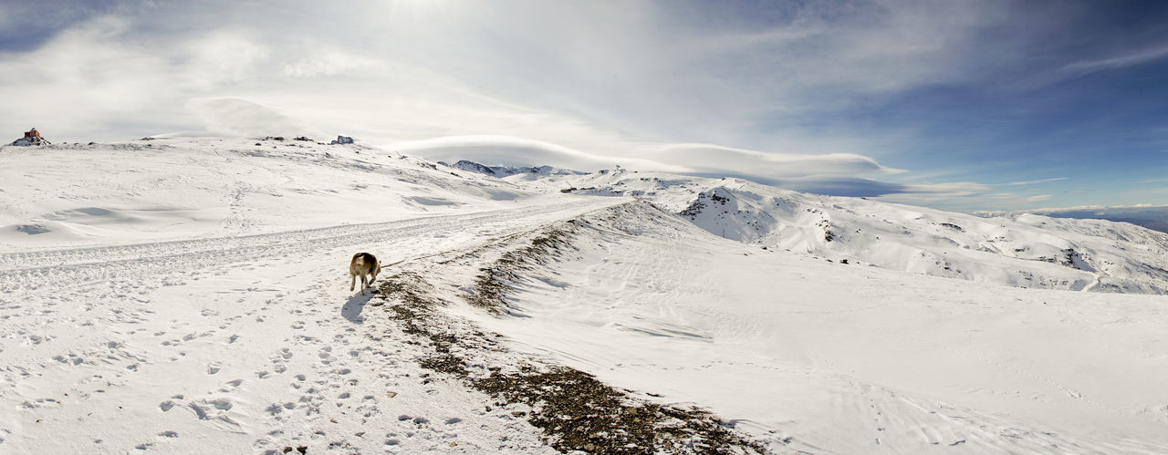 Rear view of dog on snowcapped landscape against sky