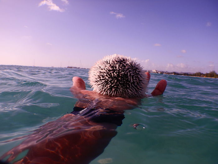 Cropped hand of man holding sea urchin against sky