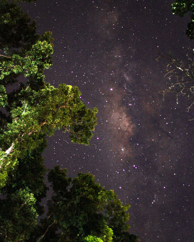 Forest nature the world Star - Space Night Space Astronomy Tree Galaxy Plant Tranquility Scenics - Nature Space And Astronomy Nature Beauty In Nature Low Angle View Outdoors Star Field Tranquil Scene Star No People Sky Growth