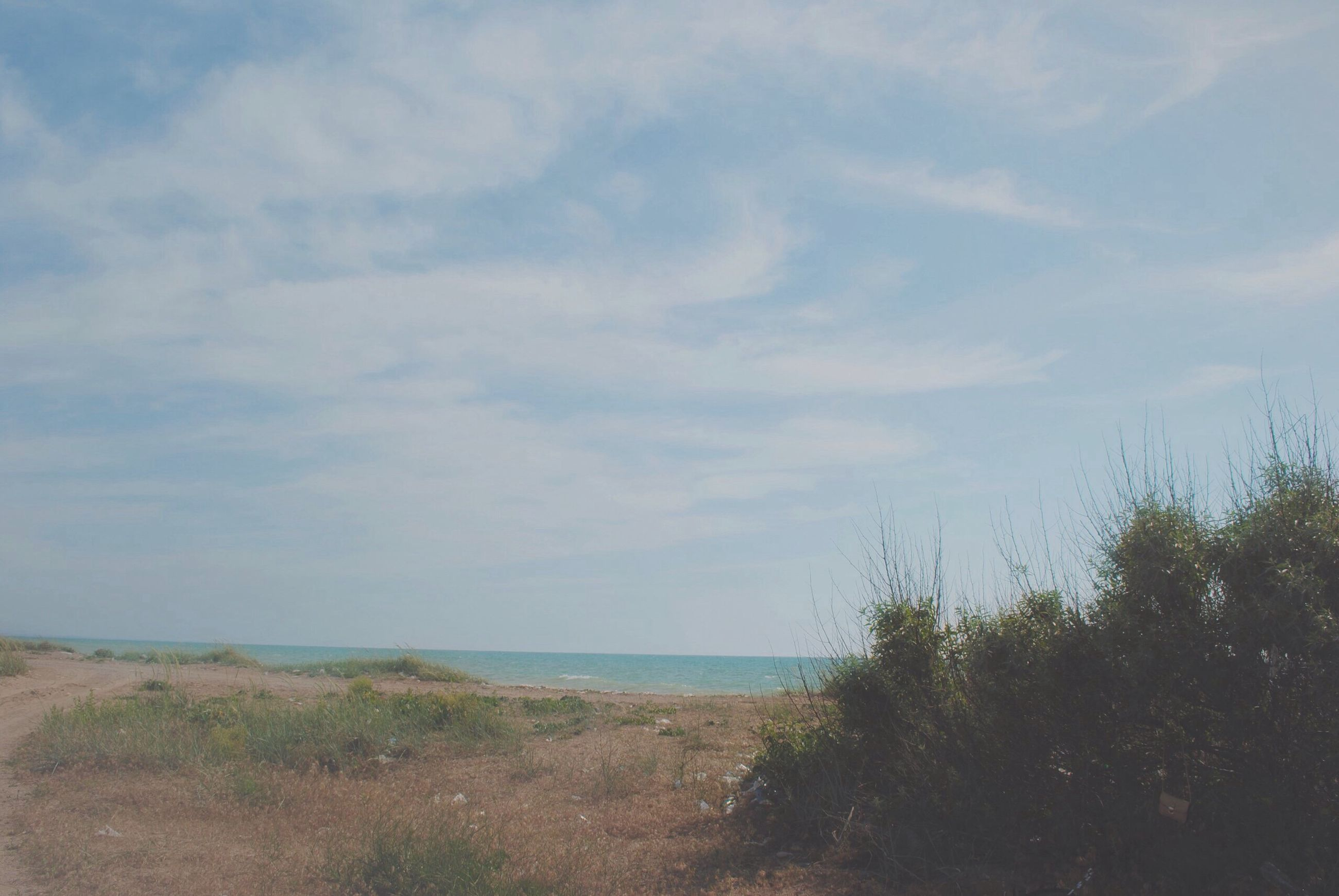 sea, sky, nature, beach, water, scenics, tranquility, tree, tranquil scene, beauty in nature, outdoors, no people, day, growth, horizon over water, cloud - sky, marram grass