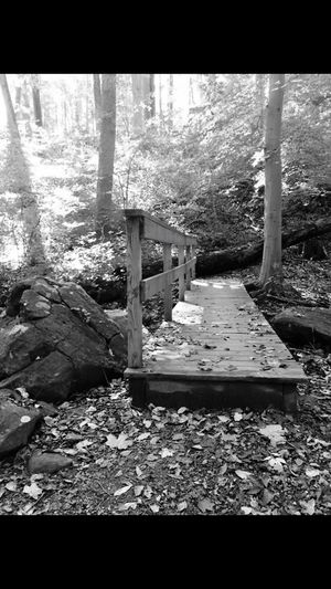 Trail Of Lights Trail Walk Hike Trees Nature_perfection Naturelovers Nature Perfectview Picoftheday View Photography Photooftheday Pic Fourmiles Blackandwhite Blackandwhite Photography Black & White Black And White Collection