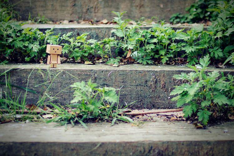 恋木神社を攻めます。Stairway Taking Photos Relaxing Danbo Nature Grassy Relaxing