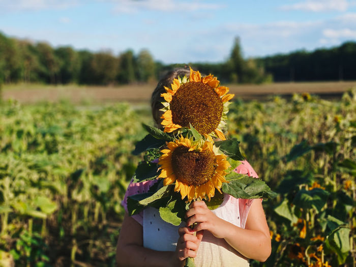 Low angle view of sunflower on field