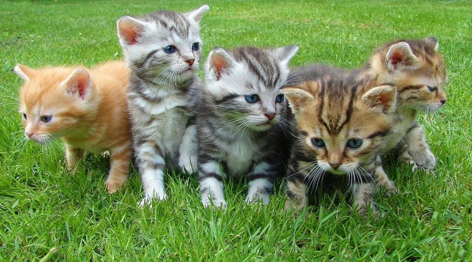 Animal Themes Close-up Day Domestic Animals Field Grass Mammal Nature No People Outdoors Pets Togetherness Young Animal