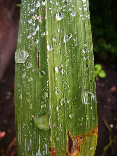 Close-up of raindrops on grass