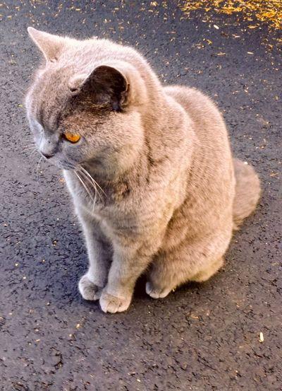 'CUTIFUL' 2018 Oslo Beautiful Pets Sitting Portrait Domestic Cat Feline Animal Themes Stray Animal Whisker Persian Cat  Cat At Home Domestic Animals Yellow Eyes Animal Face