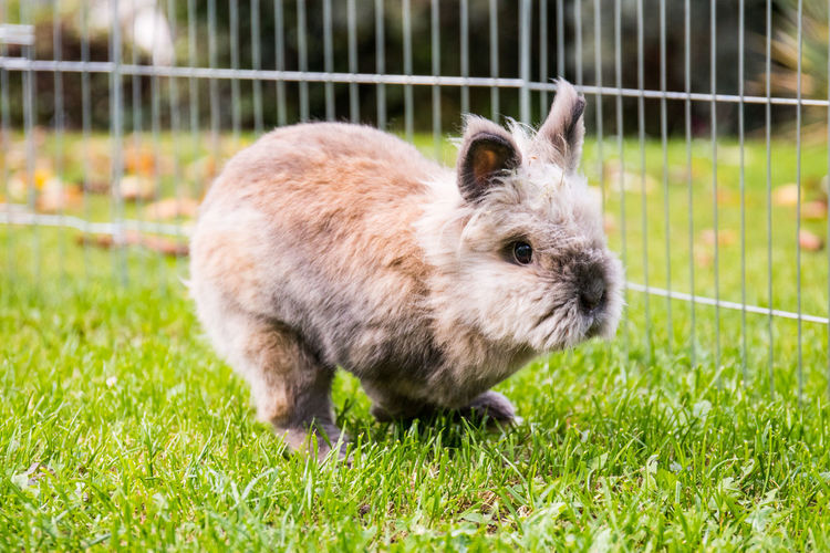 Rabbit On Playing Field