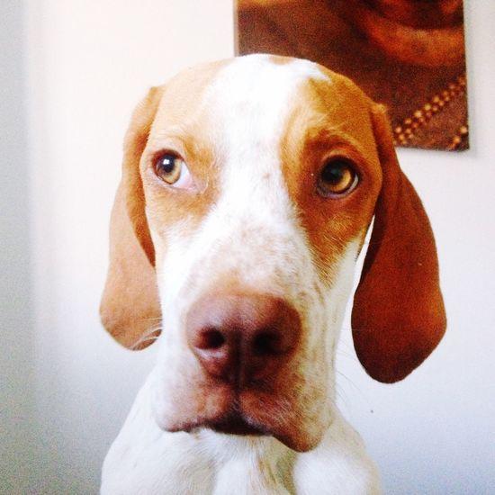 Sammy Dog Love Dog Animal Themes Close-up Animal Head  No People Indoors  Home Interior Day EyeEmNewHere