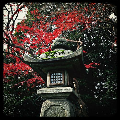 Temple Red Leaves Stone Lantern Taking Photos