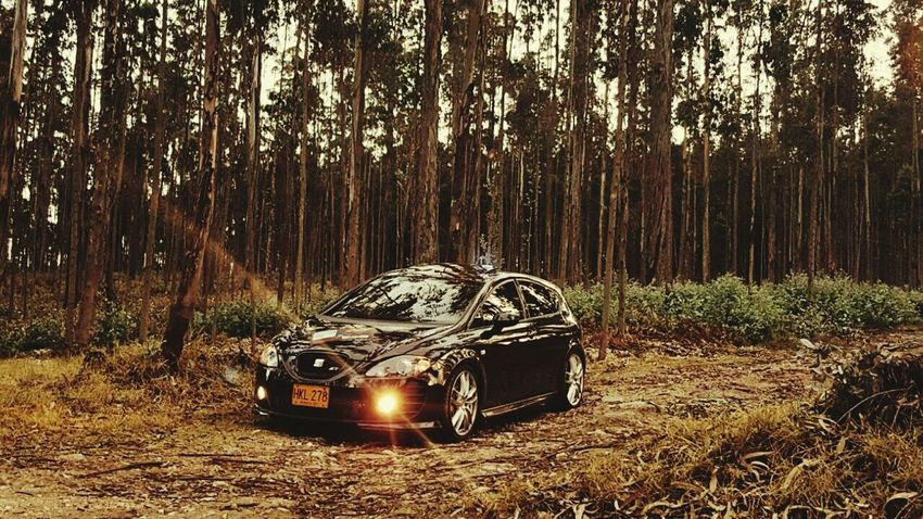 Car Outdoors Mode Of Transport Nature Land Vehicle No People Tree Transportation Day Forest Seat Leon FR Photographer Photograph Bogotacity Background Photography Engine Turbo Colombia Morning Photography Sports Race