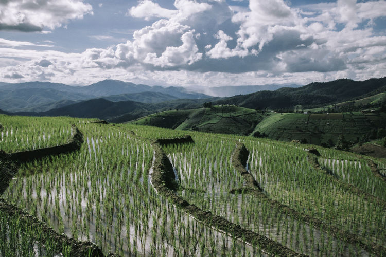 Rice terrace in northern thailand