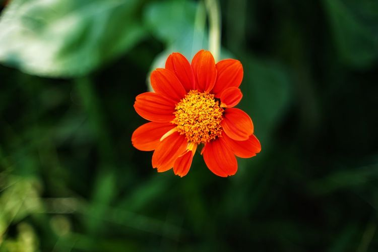 High angle view of orange flower growing outdoors