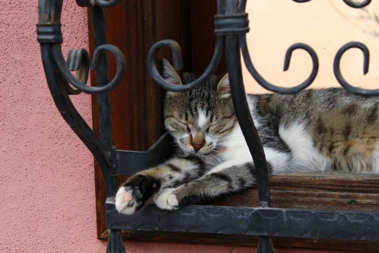 Sleepy Sleeping Window Feline Domestic Cat Pets Animal Themes Close-up Cat Window Frame The Street Photographer - 2018 EyeEm Awards EyeEmNewHere