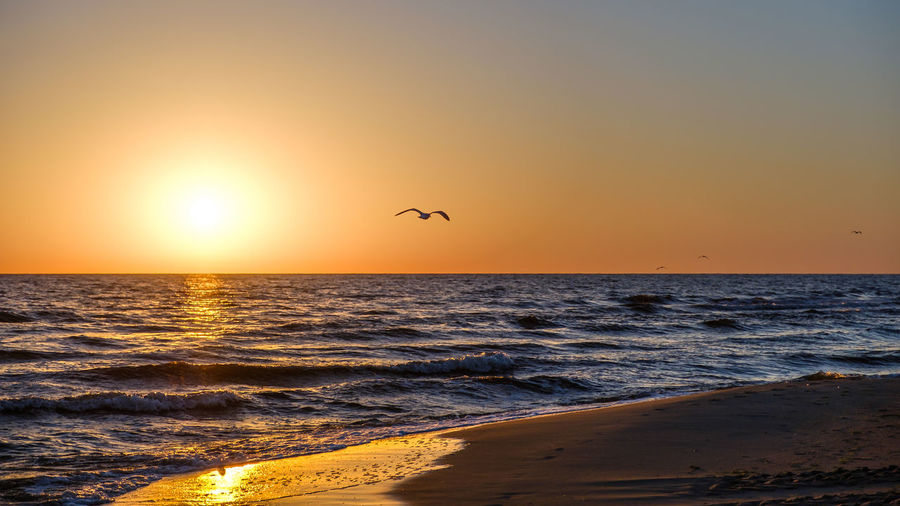 EyeEmNewHere Animal Wildlife Beach Beauty In Nature Bird Clear Sky Flying Horizon Over Water Mid-air Nature No People One Animal Outdoors Scenics Sea Silhouette Sky Sun Sunlight Sunset Tranquil Scene Tranquility Water Wave