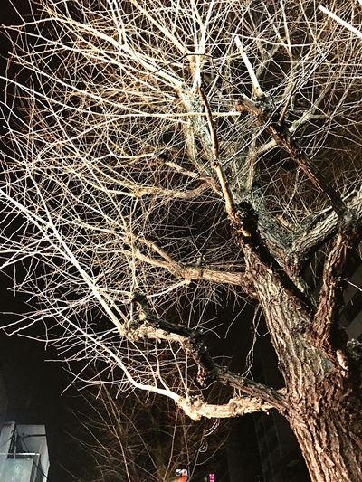 東京も雪が降って来た。 Tree