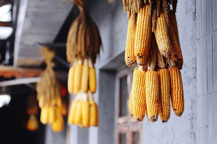 Low angle view of corns hanging at market stall