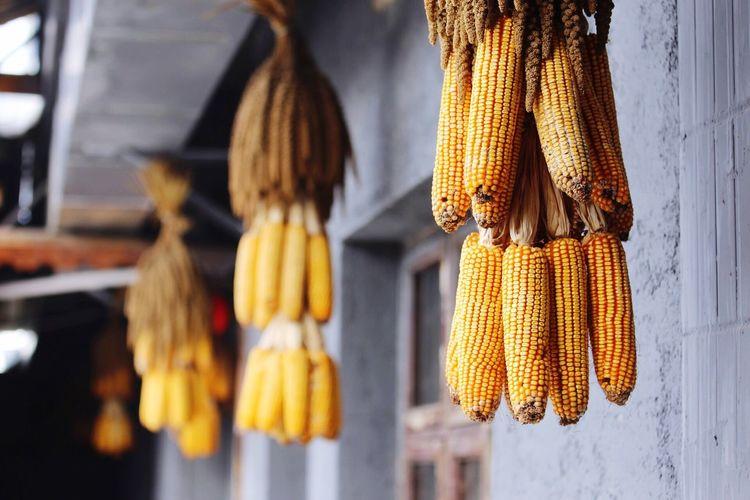 harvest Food Enjoying Life