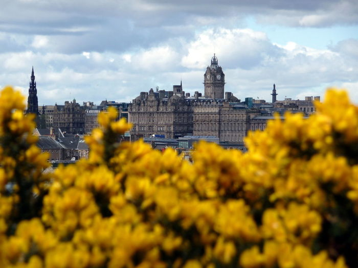 Architecture Building Exterior Built Structure Capital Cities  City Edinburgh Edinburghcity Famous Place Flower Flowers Frühling Frühlingsblümchen History International Landmark Old Town Schottland Scottland Selective Focus Spring Springtime