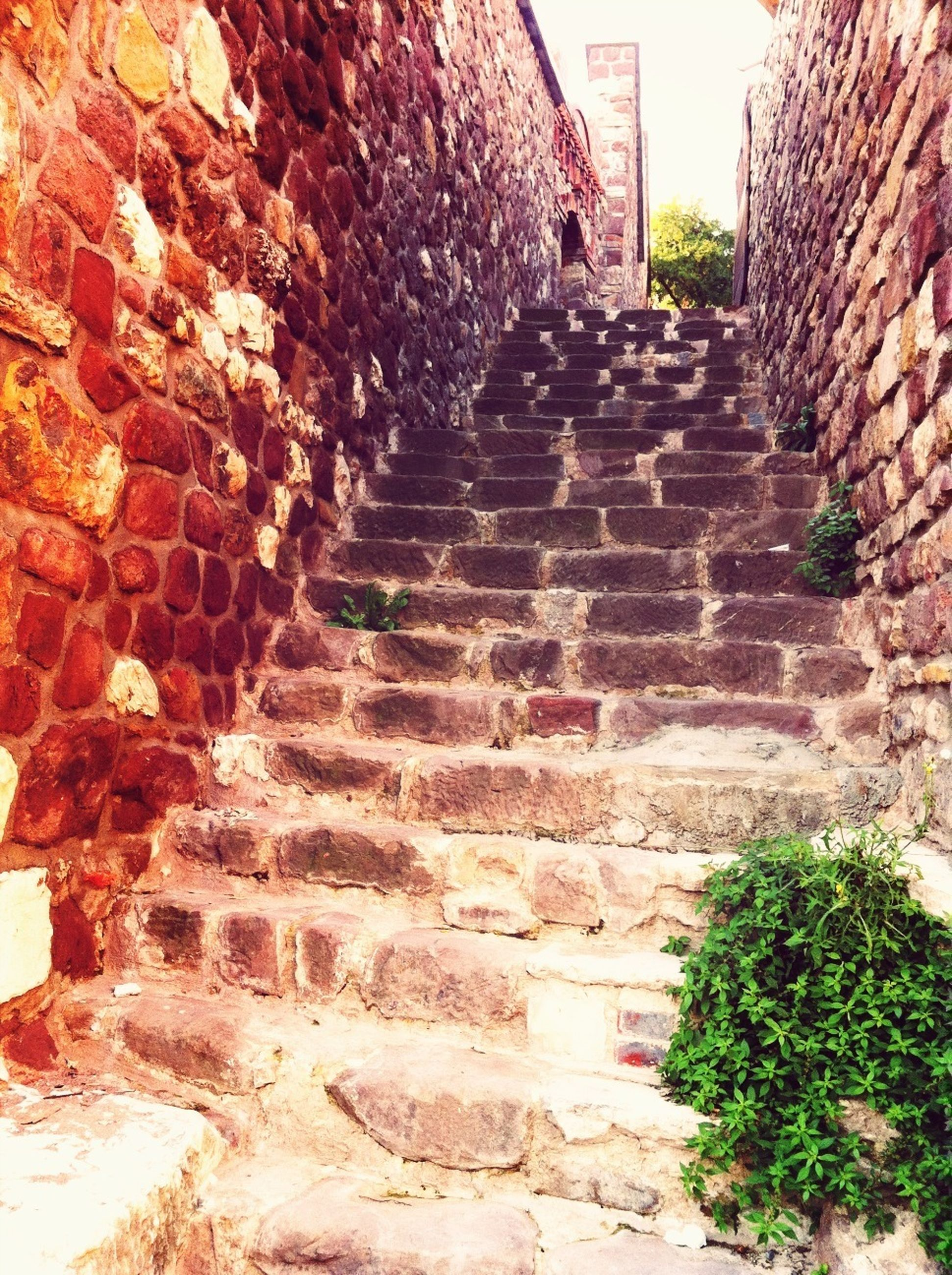 architecture, built structure, building exterior, steps, stone wall, the way forward, history, wall - building feature, steps and staircases, stone material, old, old ruin, plant, ancient, brick wall, day, the past, wall, staircase, sunlight