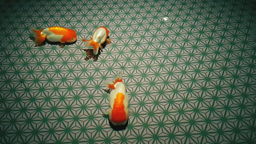 Goldfish on pattern