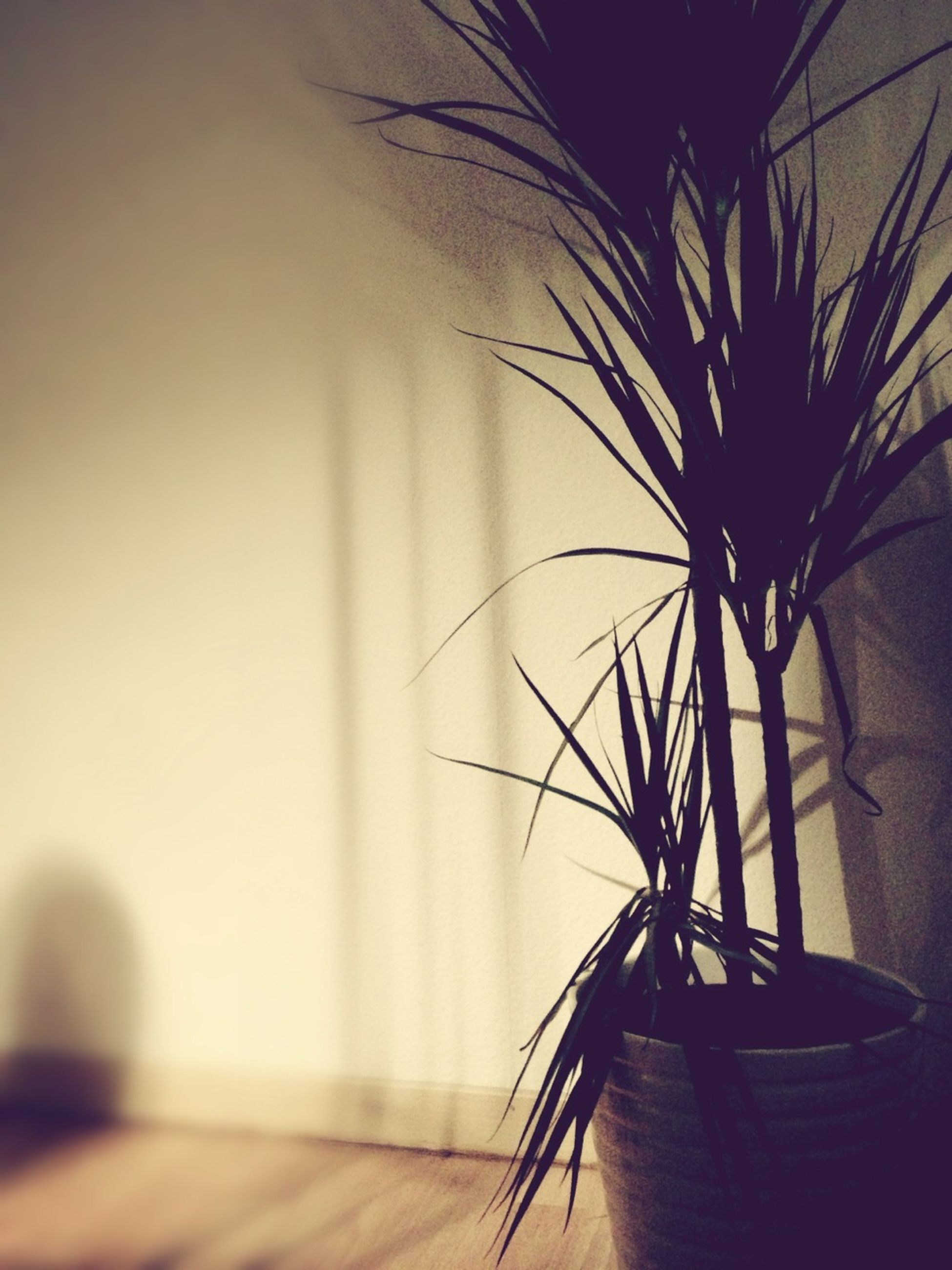 silhouette, palm tree, indoors, potted plant, focus on foreground, plant, growth, close-up, no people, nature, sunset, sunlight, home interior, low angle view, clear sky, shadow, selective focus, copy space, dusk