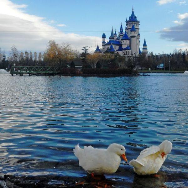 The Duck Guardians Of Tale Castle
