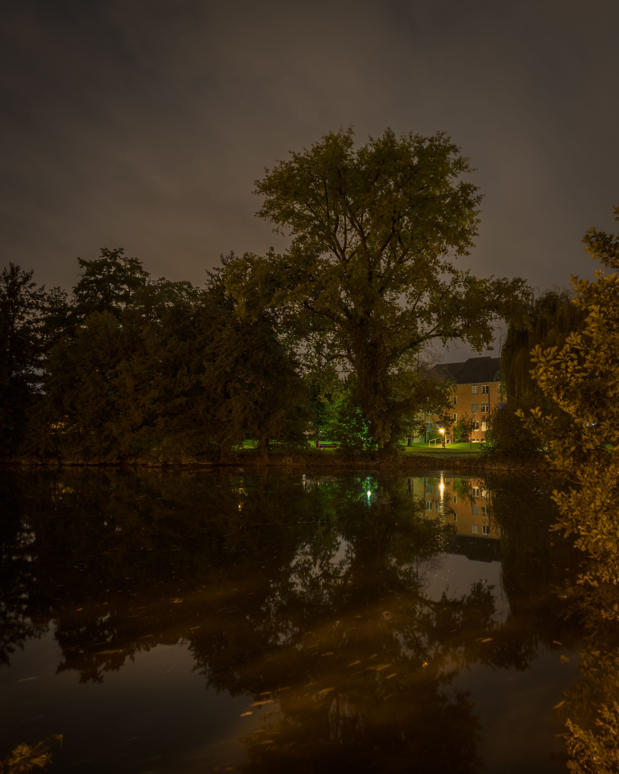 reflection, tree, plant, morning, water, nature, night, sky, leaf, lake, dusk, darkness, autumn, architecture, beauty in nature, no people, light, tranquility, outdoors, environment, scenics - nature, cloud, building, built structure, tranquil scene, building exterior