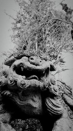 Asian Culture 狛犬 gardian lion(furumine jinjya,TOCHIGI) Black And White Monochrome Jinjya