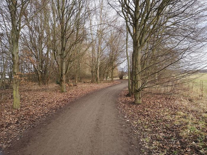 Dirt road amidst bare trees