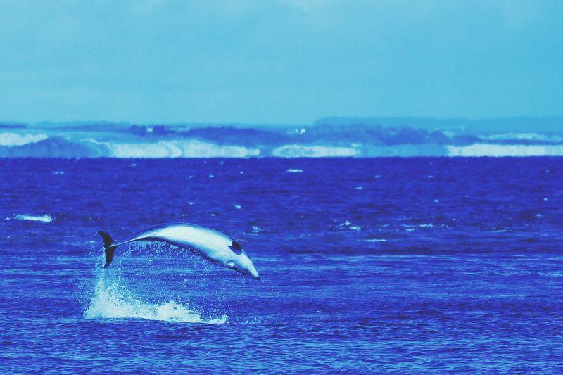 Flip. Dolphin Dolphinwatch RSPB Torry Battery Flip Aberdeen Beach