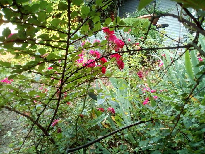 Blumen Tree
