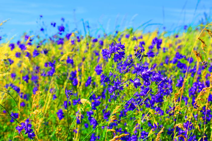 Flower Uncultivated Plant Nature Purple Summer Landscape Wildflower Green Color Beauty In Nature Outdoors Grass Blue No People Rural Scene Multi Colored Close-up Day Beauty Scenics