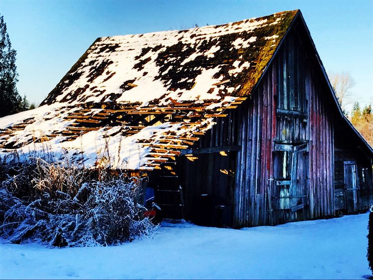 EyeEmNewHere Winter Oldbarns Farm Life Aged Wood Beautiful Scenery Barn RedBarnsareBeautiful Redbarn Barnlife