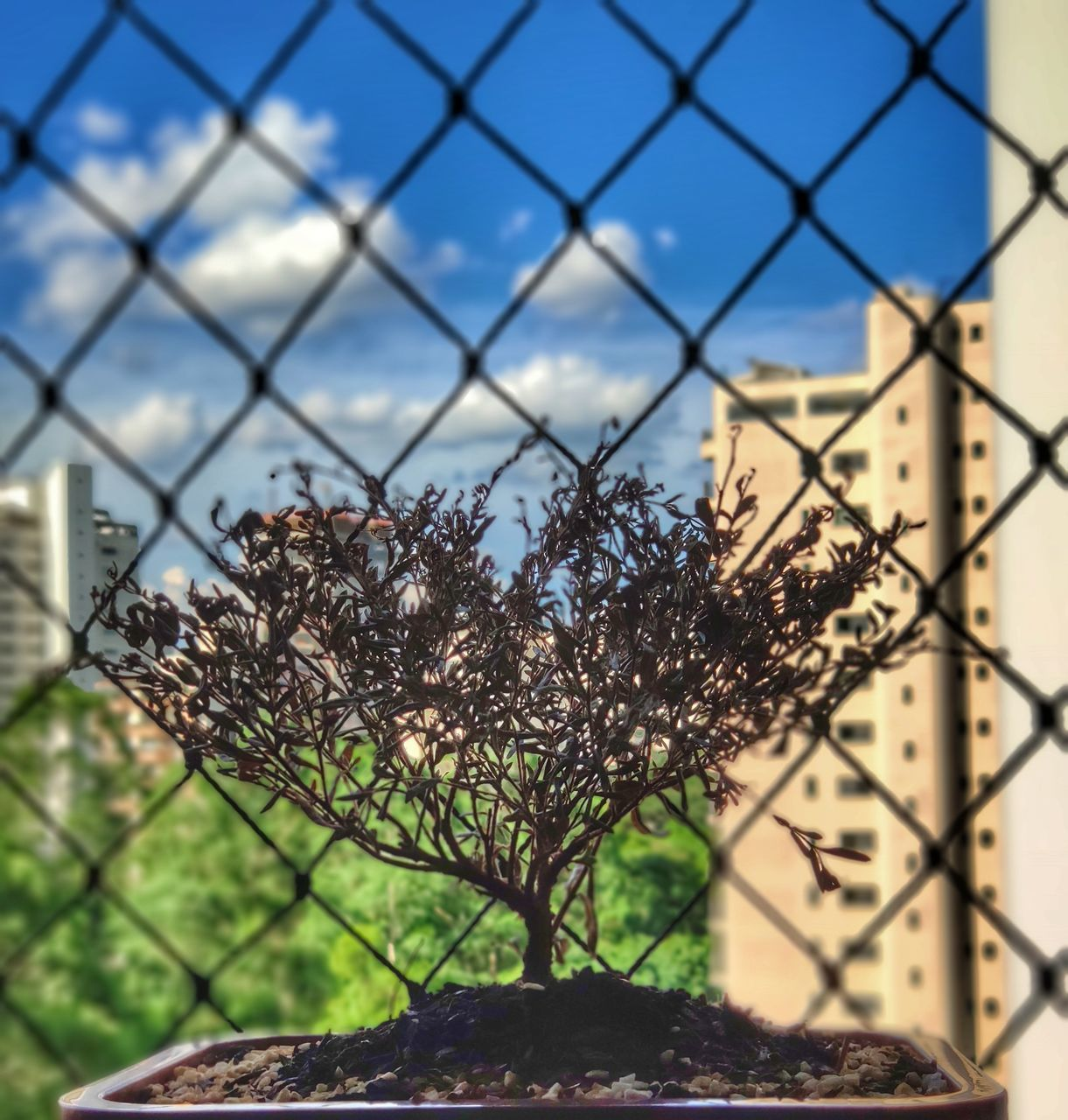 fence, focus on foreground, no people, security, protection, nature, metal, safety, chainlink fence, boundary, day, close-up, sky, barrier, plant, growth, outdoors, pattern, sunlight, architecture