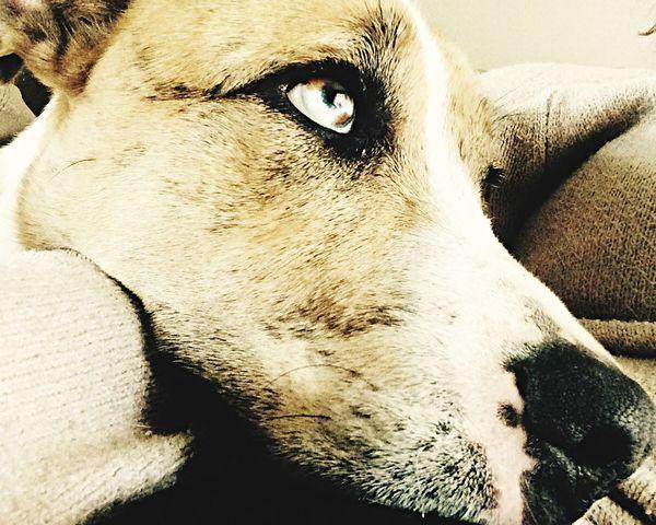 Relaxing Enjoying Life EyeEm Lifeisbeautiful My Dog Animals Australianshepherd Labrador
