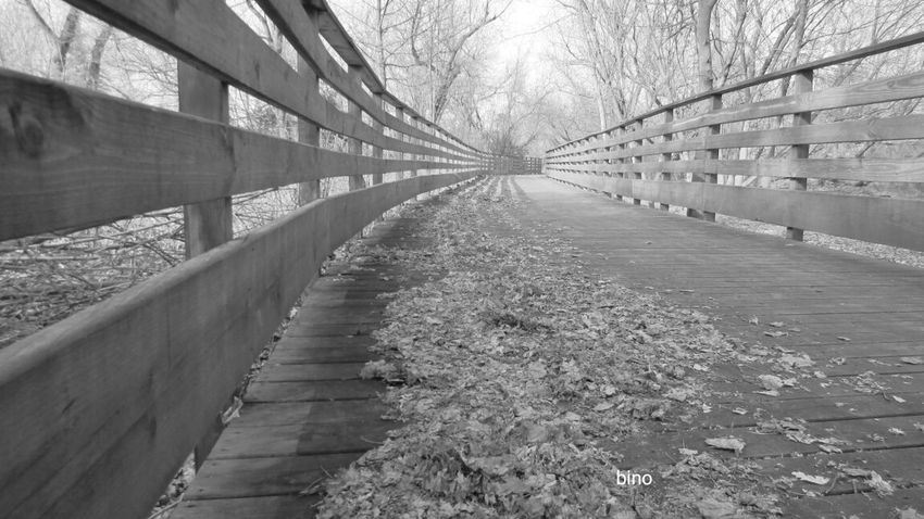 Out Walking Down The Trail Black And White Photography Clam River Boardwalk Low Angle View Cadillac Michigan
