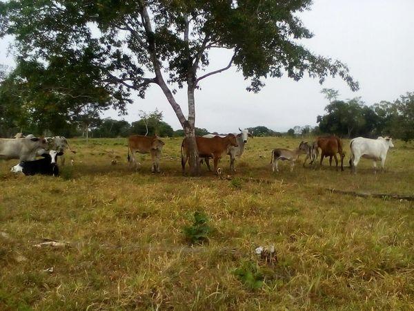 Mammal Plant Livestock Animal Themes Domestic Animals Group Of Animals Animal