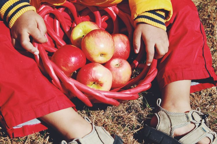 Low Section Of Child With Fresh Apples Sitting On Field