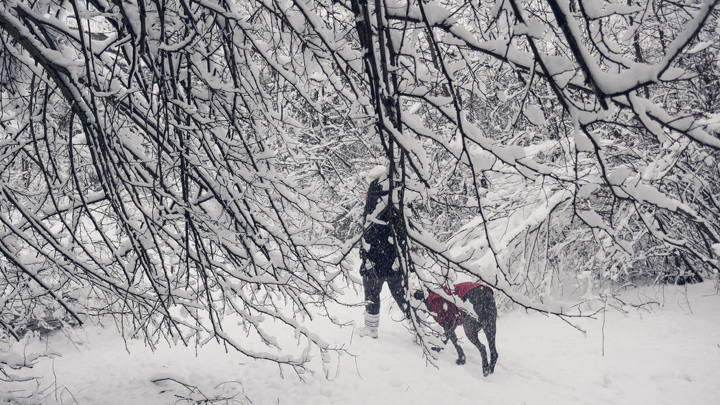Beauty In Nature Branch Cold Temperature Daily Walk Day EyeEm Best Shots EyeEm Magazine Feeling Safe Frozen Girl And Her Dog Her Best Friend Her Guard Dog ♥ Landscape Men Moment Captured Nature Outdoors People Sky Snow Tree Two People Walk By Weather Winter