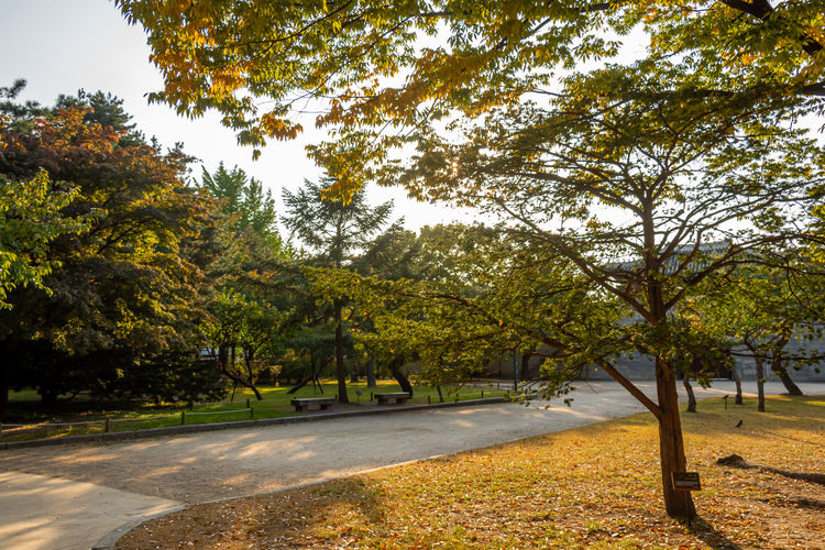 Trees by road in park during autumn